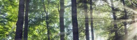 Sun beams in mist in beech forest © Frank Krahmer/Corbis