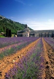 Abbaye de Sananque, Provence, France