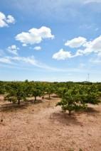 Orange orchard, Valencia Spain