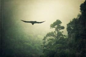 Spain, La Palma, Raven and mist-shrouded mountain